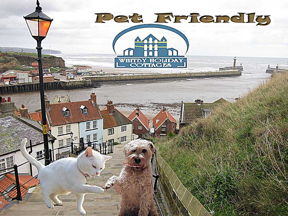 Dog and pet friendly cottages and apartments in Whitby